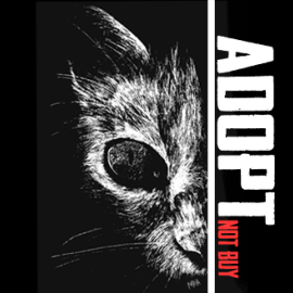Adopt_not_buy_Mireia_Mullor_Cat